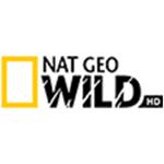 Nat Geo WILD HD -  пропонує своїм глядачам прекрасні програми про світ дикої природи, достовірно і детально розповідають про життя в цьому повному таємниць королівстві. Візитною карткою нового телеканалу є відомі і популярні цикли передач, такі як: «Світ Серенгеті», «Звірі-Титани», «Зона Смерті» та інші.